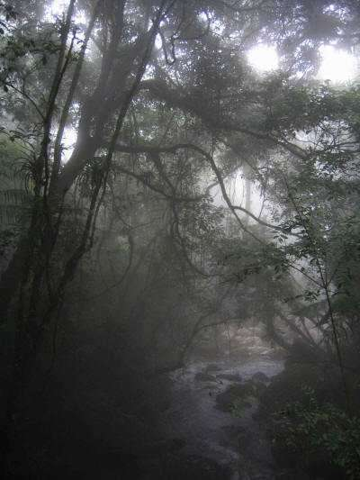 Cuyabeno Faunistic Reserve: morning mist in the forest
