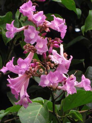 Plantas del Amazonas: Flor de la selva