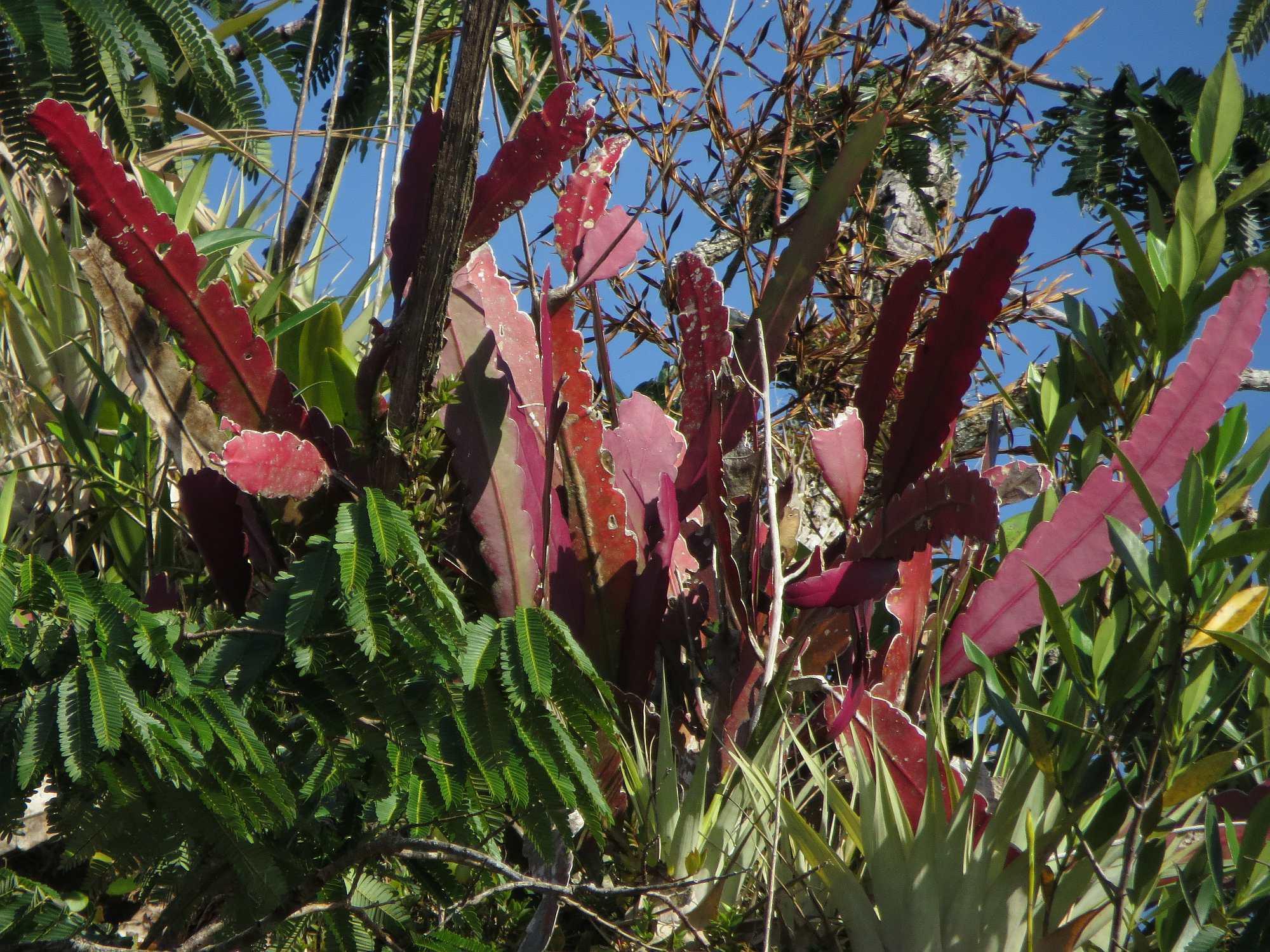 Desfuturo febrero 2014 for Plantas ornamentales del ecuador