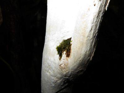 Plantas del Amazonas: Hongo tropical