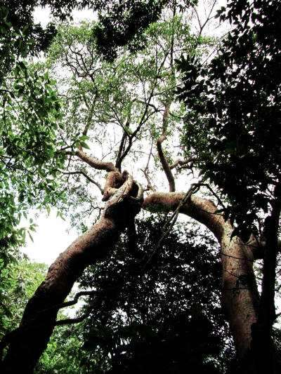 Tree in tropica jungle></a><a href=