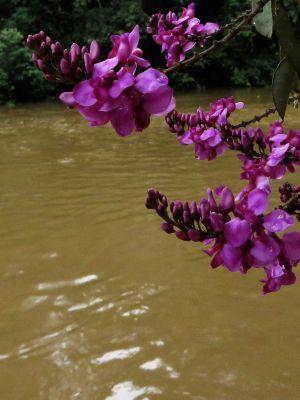 Plantas del Amazonas: Flor tropical