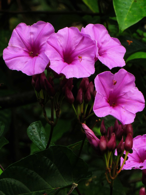 100 Plantas Del Amazonas Con Sus Nombres