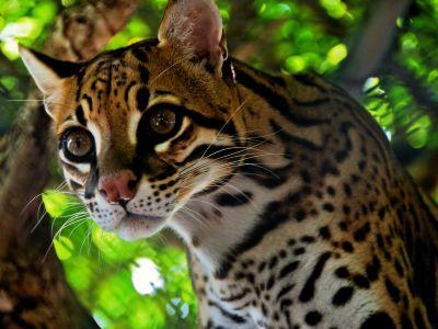 25 AMAZON RAINFOREST ANIMALS ECUADOR [MOST SPECTACULAR]