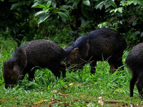 25 ANIMALES DEL AMAZONAS ECUADOR MS ESPECTACULARES