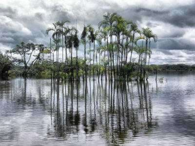 climate in the Amazon Rainforest of Ecuador: cloudy sky.