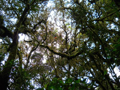 Andes Trek of Ecuador: Andes forest in Ecuador.