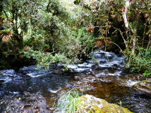 Creeks seen on Ecuador Andes Treks in Ecuador are crystal clear.