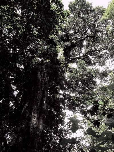 Trees in the Amazon Rainforest