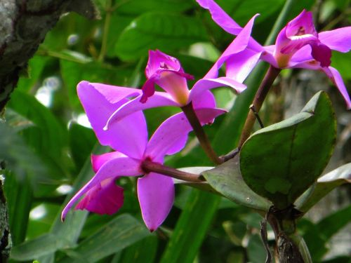 amazon rainforest plants. amazon forest plants ecuador bright orchid are very popular among the amazon rainforest plants w