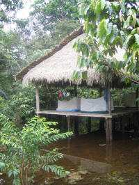 Climate in the Amazon of Ecuador: particularly the cheaper lodges have serious flooding problems and many more mosquitos.